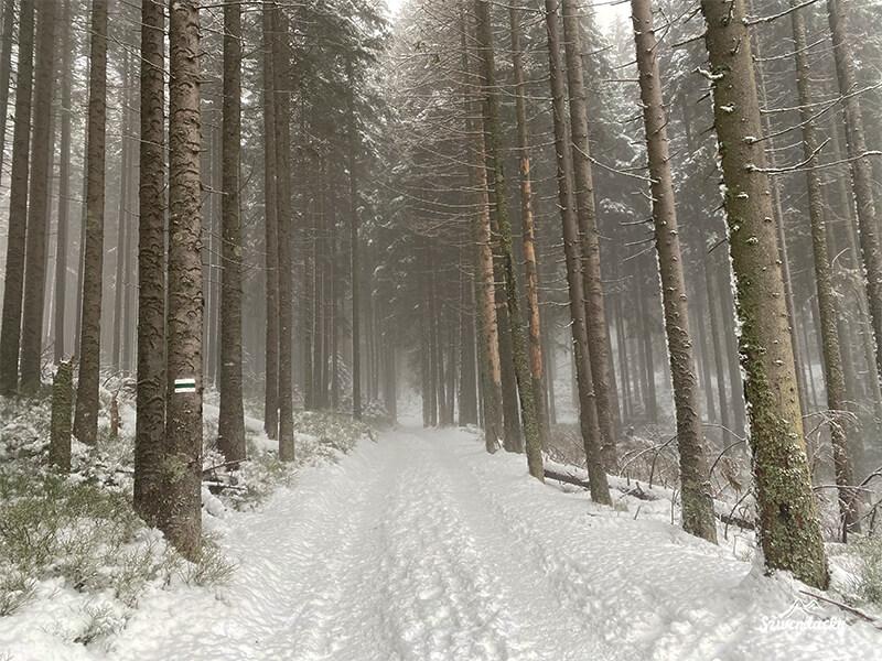 Szlak na Kasprowy Wierch mgła w lesie